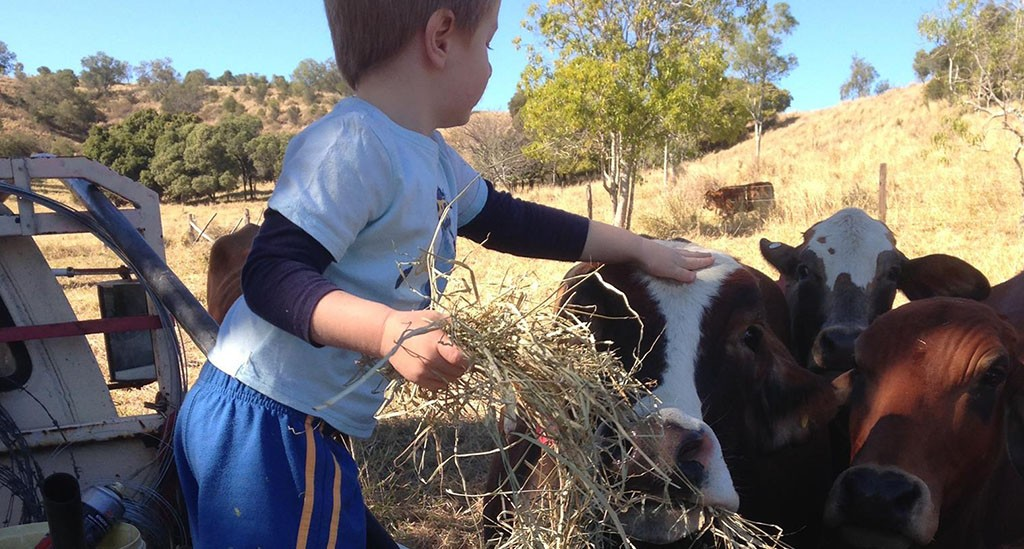 Little boy Sheppard 1,0 feeding the cattle