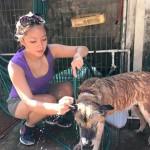 Pet Shelter 2