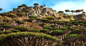 VISUAL-4-(Socotra-Island-1)