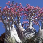 VISUAL-6-(Socotra-Island-3)