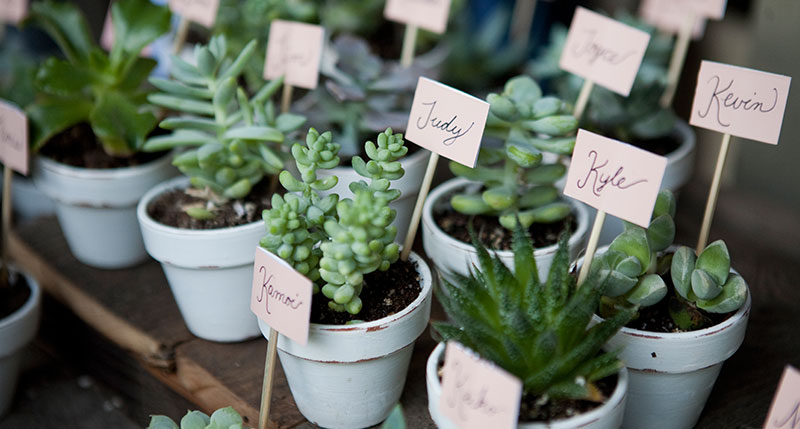 Plants And Succulents As Wedding Favours.